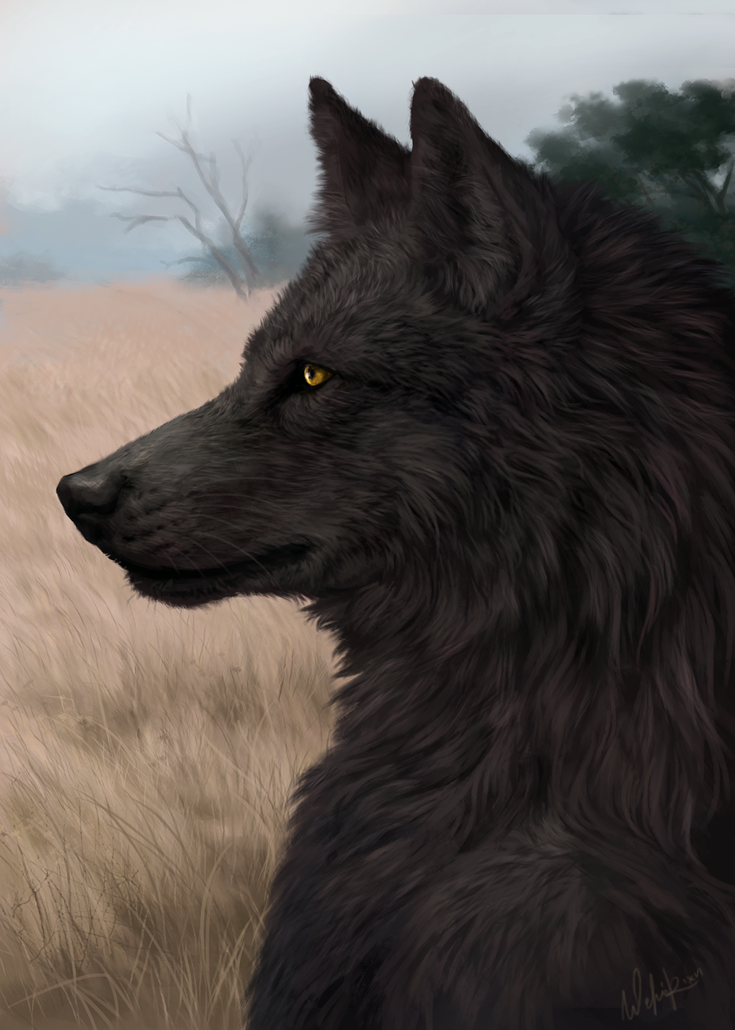 black wolf with yellow eyes - photo #17