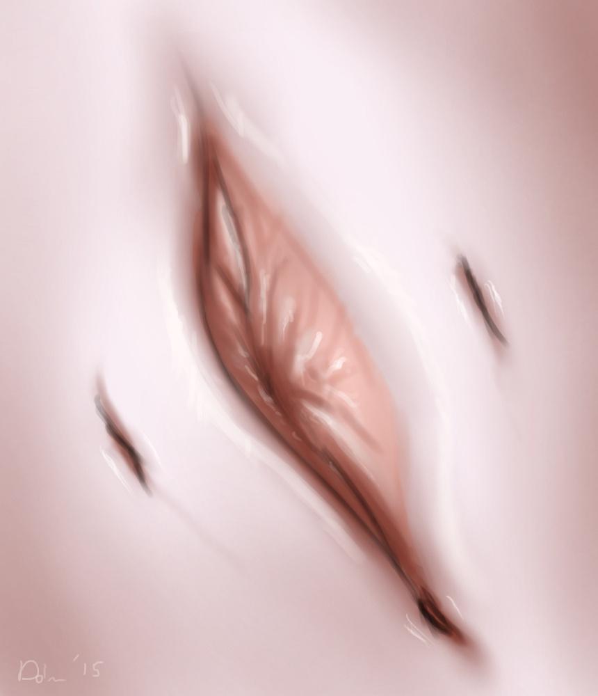 mammal clitoris Female