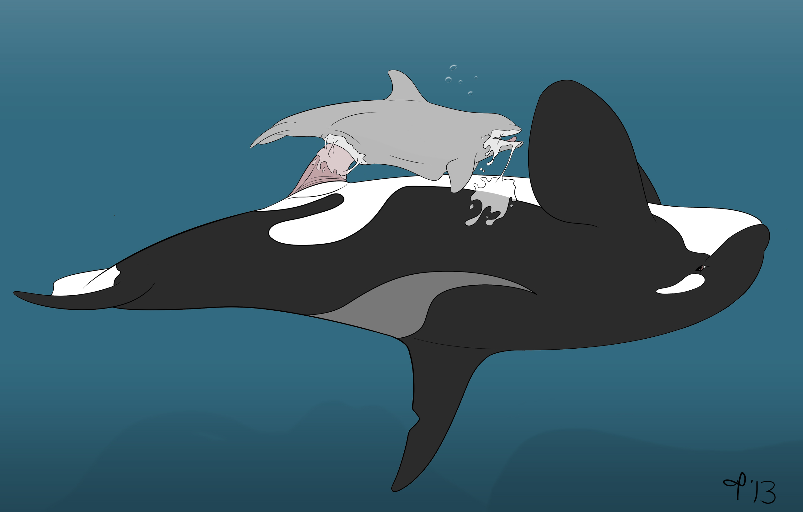 Orca whale having sex