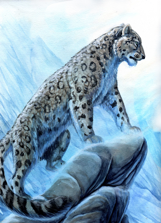 Anthro snow leopard male - photo#8