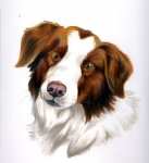 border_collie canine dog eattoast feral fluffy looking_at_viewer mammal original plain_background solo white_background   Rating: Safe  Score: 6  User: titaniachkt  Date: March 01, 2012