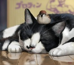 2012 ambiguous_gender avian bird cat depth_of_field duo eurasian_tree_sparrow eyes_closed feline feral floor mammal realistic reflection signature sleeping sparrow taku whiskers  Rating: Safe Score: 15 User: AnacondaRifle Date: July 25, 2012""