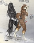 animal_genitalia anthro balls bernese_mountain_dog canine digitigrade dog duo equine eye_contact hobbesdawg hooves horse horsecock inside male male/male mammal muscles penis raised_tail roderick sabretoothed_ermine sex shower wet  Rating: Explicit Score: 17 User: Caroway Date: April 07, 2010