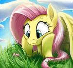 2015 arthropod cute equine female feral fluttershy_(mlp) friendship_is_magic insect ladybug mammal my_little_pony otakuap pegasus smile wings   Rating: Safe  Score: 16  User: Robinebra  Date: February 22, 2015