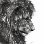 ambiguous_form feline lion male mammal mane monochrome novawuff portrait side_view simple_background solo whiskers white_backgroundRating: SafeScore: 5User: SnowWolfDate: January 30, 2018