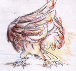 ambiguous_gender avian beak claws feral fire night_owl nintendo noctowl owl pokémon sketch solo video_games wings   Rating: Safe  Score: 5  User: Test-Subject_217601  Date: November 29, 2011