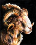 black_background brown_eyes caprine curly_horns eattoast feral fluffy horn looking_at_viewer mammal original plain_background portrait profile ram solo   Rating: Safe  Score: 2  User: titaniachkt  Date: March 01, 2012