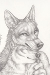 2015 anthro arctic_fox canine couple coyote cuddling duo ear_piercing eyes_closed fox greyscale looking_down male mammal monochrome piercing puquanah ransom rukis smile traditional_media_(artwork)  Rating: Safe Score: 6 User: Yosemite095 Date: January 02, 2016