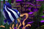 aquarium deb disney female feral finding_nemo findingdeb fish forced marine pixar rape tentacle_rape tentacles water  Rating: Explicit Score: 1 User: riveriss Date: June 26, 2015