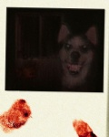 ambiguous_gender blood canine creepypasta dog feral fingerprint grin husky looking_at_viewer mammal nightmare_fuel photo scary smile smile.dog teeth  Rating: Safe Score: 2 User: John_Smith Date: September 27, 2011