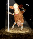animated bovine cattle cyriak dancing female hay lipstick low_res makeup mammal pole pole_dancing solo teats udders what