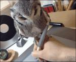 ambiguous_gender animated avian beige_skin bird creating_art cute duo grey_feathers human magnifying_glass mammal owl pet real solo_focus stylus white_feathers   Rating: Safe  Score: 72  User: Ko-san  Date: June 20, 2014