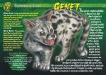 ambiguous_gender english_text feral fur genet mammal open_mouth sharp_teeth solo spots standing teeth text tongue   Rating: Safe  Score: 0  User: Åndensvampyr  Date: April 24, 2014