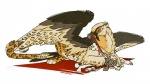 avian beak bearded_vulture bird bone dead death eating feather feathers feline fystilago gore grave_gryphon gryphon hybrid jaguar looking_at_viewer lying mammal rosettes sefeiren skull spots teeth wings yellow_eyes   Rating: Safe  Score: 8  User: otterface  Date: February 01, 2013