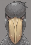 ambiguous_gender angry avian beak bird feathers feral grey_feathers headshot_portrait pelecaniform petaroh portrait reaction_image shoebill simple_background solo stareRating: SafeScore: 10User: anon1234Date: May 18, 2010