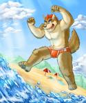 anthro as40728 beach bulge canine clothing cloud male mammal outside seaside sky solo speedo swimsuit water wolf  Rating: Safe Score: 3 User: Pokelova Date: January 14, 2015""
