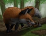 amber_eyes ambiguous_gender black_fur brown_fur canine eyewear feral forest fox fur goggles ipoke male mammal mouse orange_fur rat rodent tree white_fur  Rating: Safe Score: 8 User: Pwnerer Date: August 31, 2015