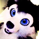 ambiguous_gender anthro big_eyes blue_eyes canine costume dog fur fursuit husky looking_at_viewer mammal open_mouth photo real selfie sheppy solo teeth  Rating: Safe Score: 4 User: Sheppy87 Date: October 15, 2014""