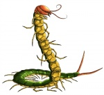 ambiguous_gender antennae arthropod centipede daisuke hi_res multi_limb myriapod not_furry solo