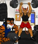 2014 abs alien anthro biceps big_muscles black_hair black_stripes blue_eyes bodybuilding brown_eyes brown_hair brown_nose bulge clothing duo feline footwear fur grin gym hair holding iudicium86 karol_(character) lombax looking_at_viewer male mammal markings muscles orange_fur pose ratchet_and_clank red_stripes shirt shoes shorts sitting standing tank_top teeth tiger toned video_games weightlifting weights workout   Rating: Questionable  Score: 1  User: Karol_the_Lombax  Date: November 16, 2014