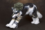 beastcub canine feral fursuit imp link_(wolf_form) male mammal nintendo piercing quadsuit real solo stretching the_legend_of_zelda twilight_princess video_games wolf  Rating: Safe Score: 2 User: msc Date: March 31, 2009""