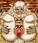 anthro caprine close-up collar female fur horn kemono mammal open_mouth pussy pussy_close-up seigen sheep solo spread_legs spread_pussy spreading white_fur yellow_eyes   Rating: Explicit  Score: 1  User: KemonoLover96  Date: January 03, 2015