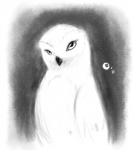 ambiguous_gender avian bird dawkz feral hi_res monochrome owl snowy_owl solo  Rating: Safe Score: 0 User: Tauxiera Date: July 24, 2012