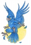 ambiguous_gender anthro avian bird feathered_wings feathers female flying hyacinth_macaw macaw nude parrot solo spread_wings wingedwolf wings