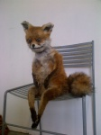 adele_morse ambiguous_gender anthro canine chair fox fur lol_comments looking_at_viewer mammal nightmare_fuel oddly_cute orange_fur plushie real sitting solo source_request stoned_fox taxidermy uncanny_valley what_has_science_done where_is_your_god_now white_fur why