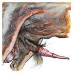 anatomically_correct anatomically_correct_penis animal_genitalia balls bovine bovine_penis cattle erection feral hair male malicorne_(artist) mammal penis simple_background solo white_background  Rating: Explicit Score: 7 User: Munkelzahn Date: September 20, 2015