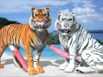 3d all_fours animal_genitalia balls beach big_balls big_penis erection feline feral fur hyper looking_at_viewer male mammal orange_fur penis presenting seaside tapiko tiger white_fur white_tiger   Rating: Explicit  Score: -9  User: DSTakumiDerp  Date: March 03, 2014
