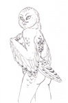 anthro avian bird breasts female firenze monochrome nude owl snowy_owl solo  Rating: Questionable Score: 2 User: Tauxiera Date: July 24, 2012""