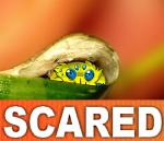 ambiguous_gender arachnid arthropod blue_eyes cute english_text feral joltik kaffeekatze multi_eye nintendo pokémon pokémon_(species) reaction_image solo sweat text video_gamesRating: SafeScore: 100User: NujiDate: October 08, 2016