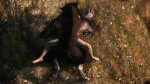 3d ambiguous_gender canine discombobulation duo forced human lying male mammal missionary_position on_back rape screencap sex shaded shadow skyrim the_elder_scrolls video_games were werewolf  Rating: Explicit Score: 27 User: discombobulation Date: July 01, 2013
