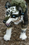 ambiguous_gender beastcub canine feral fursuit link_(wolf_form) mammal nintendo piercing quadsuit real solo the_legend_of_zelda twilight_princess video_games wolf  Rating: Safe Score: 3 User: msc Date: March 31, 2009""