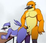 anal anal_penetration anthro avian balls bent_over bird blue_jay cartoon_network chest_tuft clothing duo elfein erection feathers from_behind fur half-closed_eyes john_(regular_show) looking_back lying male male/male mordecai_(regular_show) navel nipples nude on_side open_mouth outside penetration penis regular_show sex simple_background smile tongue tuft underwear underwear_aside underwear_sex vein white_background  Rating: Explicit Score: 10 User: EmoCat Date: September 30, 2015
