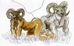 2010 all_fours anthro ass_to_ass balls bracciotoon caprine duo grass male mammal nipples penis simple_background white_background  Rating: Explicit Score: 0 User: Munkelzahn Date: July 19, 2012