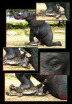blood cheetah comic drages duo elephant feline feral forced male male/male mammal penis rape size_difference   Rating: Explicit  Score: -6  User: JazztheJizz  Date: February 24, 2015