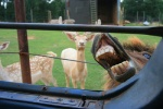 ambiguous_gender barn car cervine deer displacement equine farm fence feral group horse humor ladder low_res mammal nightmare_fuel real unknown_artist vehicle what