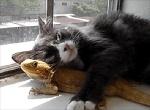 ambiguous_gender animated bearded_dragon black_fur cat cuddling cute duo feline feral fur hug lizard low_res mammal real reptile scalie window  Rating: Safe Score: 27 User: Daniruu Date: September 20, 2012