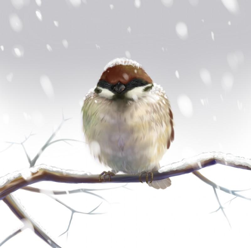 e621 ambiguous_gender avian beak bird branch eurasian_tree_sparrow eyes_closed feral on_branch outside realistic restricted_palette shoudoubutsu sitting snow solo sparrow winter