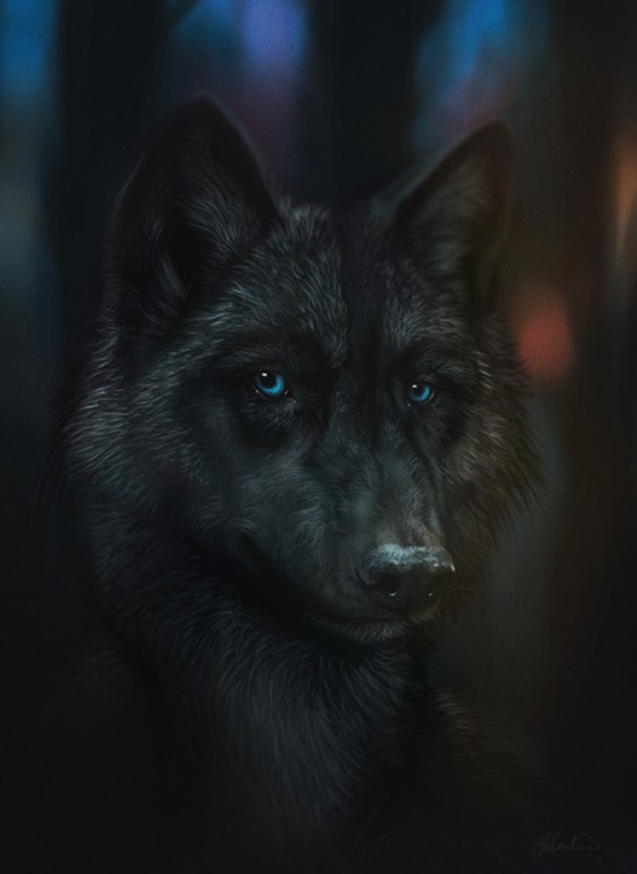 e621 ambiguous_gender black_fur black_nose blue_eyes canine dark_theme detailed detailed_background feral fur looking_at_viewer mammal mondeis photorealism solo wolf