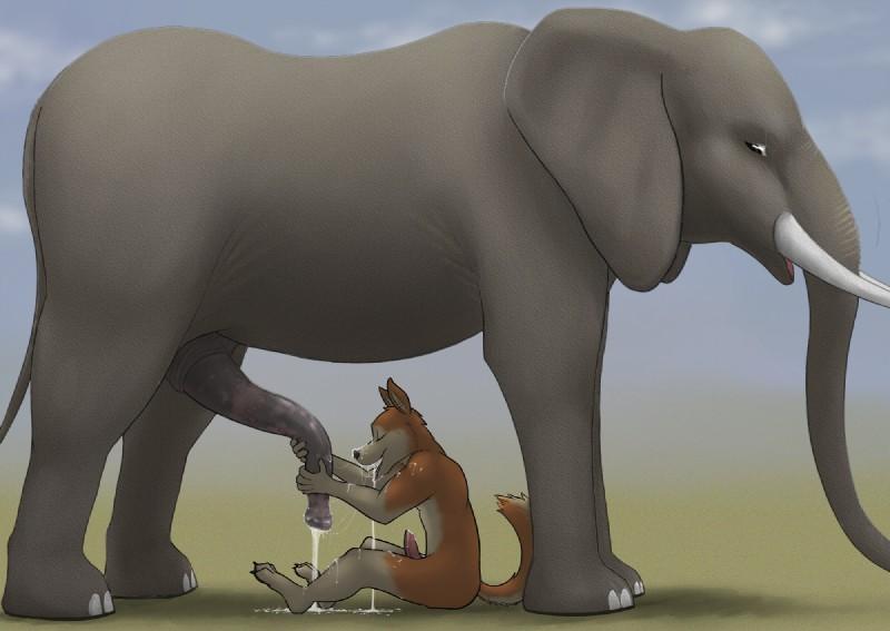 Elefant Penis